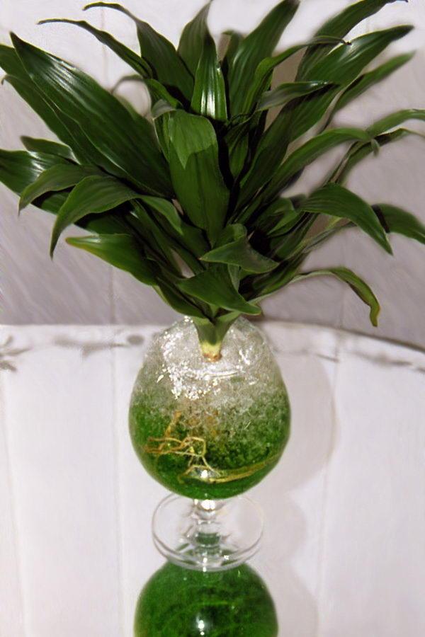 Комнатный цветок гузмания уход размножение общие сведения